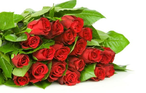 cvety-krasnye-rozy-butony-4537